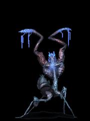 Ice Mantis