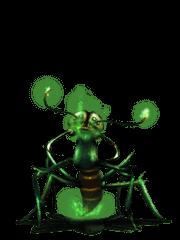 Poisonous Giant Ant