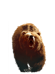 Rabid Bear